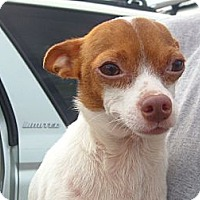 Adopt A Pet :: Spike - Windsor, MO