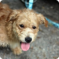 Adopt A Pet :: Nene - Tinton Falls, NJ