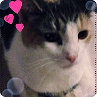 Adopt A Pet :: Whinnie - Island Park, NY
