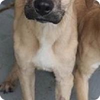 Adopt A Pet :: KENNY- PENDING ADOPTION!! - Birmingham, MI