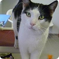 Adopt A Pet :: O'Doule - Hamburg, NY