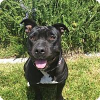 Adopt A Pet :: Luna - Rancho Cucamonga, CA