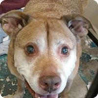 Adopt A Pet :: Walter - Franklin, NH