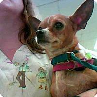 Adopt A Pet :: LOLLIE - Conroe, TX