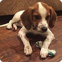 Adopt A Pet :: Riley - Flower Mound, TX