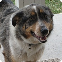 Adopt A Pet :: Kya - Columbus, NE