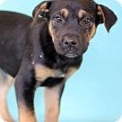 Adopt A Pet :: Arugula