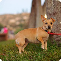 Adopt A Pet :: IVONNE - Irvine, CA