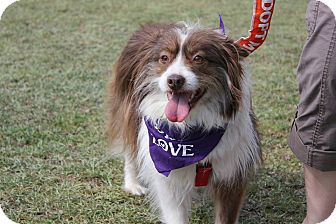 Border Collie Mix Dog for adoption in Baton Rouge, Louisiana - S'mores