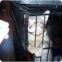 Adopt A Pet :: Carissa - Grand Rapids, MI