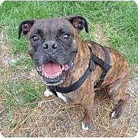 Adopt A Pet :: Rocky - Julian, NC