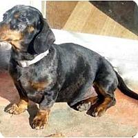 Adopt A Pet :: Donnelly - San Jose, CA
