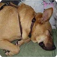 Adopt A Pet :: Jimmy - Miami, FL