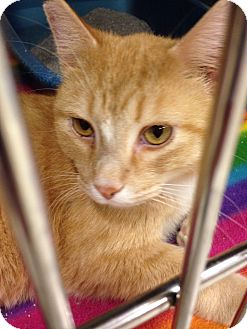 Cats For Adoption In Muncie Indiana