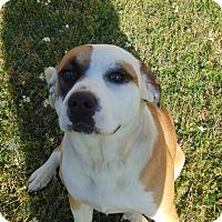 Adopt A Pet :: Amelia Earhart - Lufkin, TX