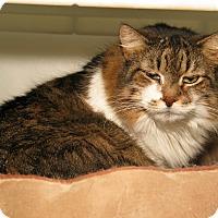 Adopt A Pet :: Terri - Milford, MA