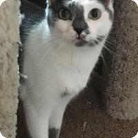 Adopt A Pet :: Delilah - Visalia, CA