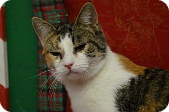 Calico Cat for adoption in Rockwood, Tennessee - ANGEL