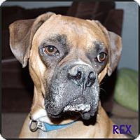 Adopt A Pet :: Rex - Boise, ID