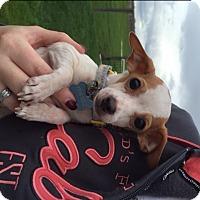 Adopt A Pet :: Copper - Vacaville, CA