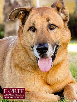 Belgian Malinois Mix Dog for adoption in Marina del Rey, California - Rocky