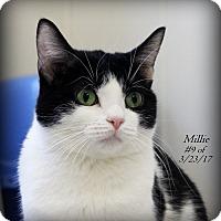 Adopt A Pet :: Millie - Gaylord, MI