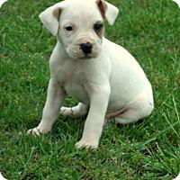 Adopt A Pet :: Ava - Waterbury, CT