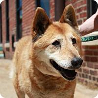 Adopt A Pet :: Rita - Richmond, VA
