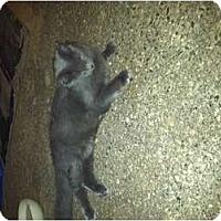 Adopt A Pet :: AZUL - Clay, NY