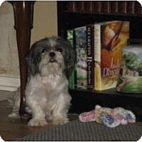 Adopt A Pet :: Callie - Tyler, TX