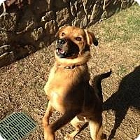 Adopt A Pet :: Maggie - New Boston, NH