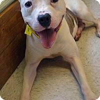 Adopt A Pet :: Dudley - Toledo, OH
