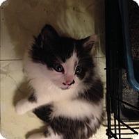 Adopt A Pet :: Tutu - Stafford, VA