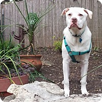 Adopt A Pet :: Titan - Austin, TX