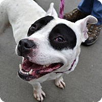 Adopt A Pet :: Dolce - Meridian, ID