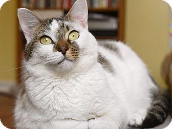 Domestic Shorthair Cat for adoption in Marietta, Georgia - Betsy
