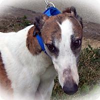Adopt A Pet :: Mary - Florence, KY