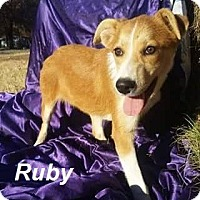 Adopt A Pet :: Ruby in CT - Manchester, CT
