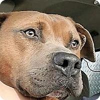 Adopt A Pet :: Prince Charming - St.Ann, MO