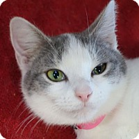Adopt A Pet :: Gracie - Redwood City, CA