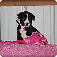 Adopt A Pet :: Lulu - Brattleboro, VT