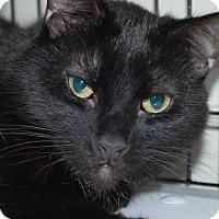 Adopt A Pet :: Shadow - Victor, NY