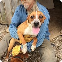 Adopt A Pet :: Tawny - Hohenwald, TN
