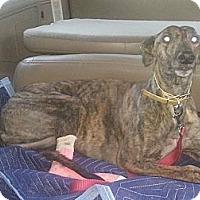 Adopt A Pet :: Jenna - Vidor, TX
