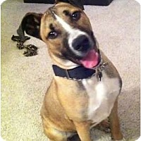 Adopt A Pet :: Malleus - Phoenix, AZ