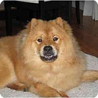 Adopt A Pet :: Nikko - Rigaud, QC
