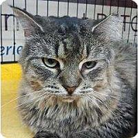 Adopt A Pet :: Connie (PO) - Little Falls, NJ