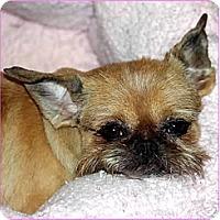 Adopt A Pet :: TAFFY - ADOPTION PENDING - Little Rock, AR