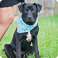 Adopt A Pet :: Finn - Kingwood, TX