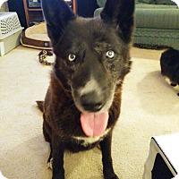 Adopt A Pet :: Truffle - Richmond, VA